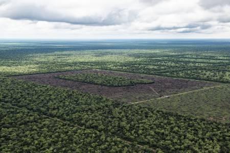 Deforestación durante el 2019